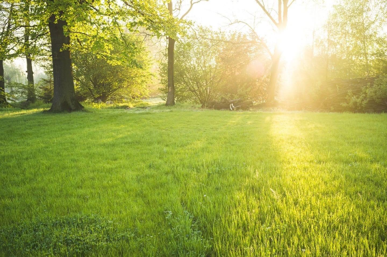 legendary lawn