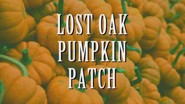 Lost Oak Pumpkin Patch @ Lost Oak Winery